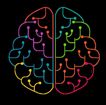 brain esquema colores